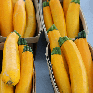 Yellow Courgette Seeds at Seed Bank Ireland