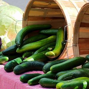 Cucumber Seeds at Seed Bank Ireland