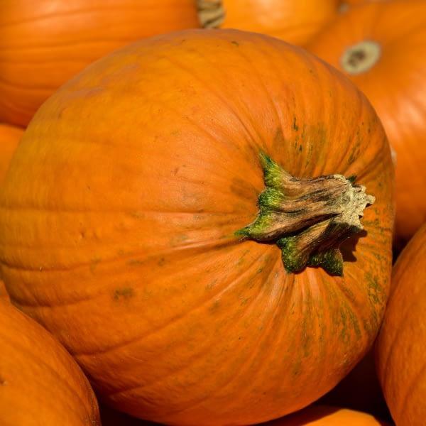 Pumpkin Seeds at Seed Bank Ireland
